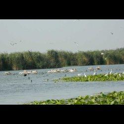 Delta Dunarii Pelicani